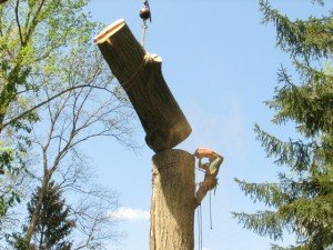 boom verwijderen met hijskraan