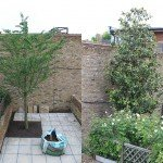boom in smalle tuin